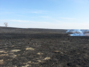 smoldering burned prairie