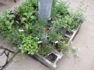 Cinder Block Herb Garden 3