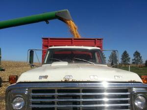 Loading the Grain Truck