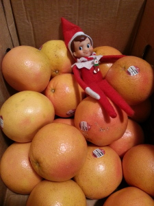 Our Elf on the Shelf found the FFA fruit that was just delivered!