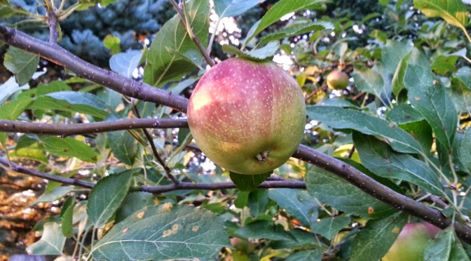Wordless Wednesday – Apples