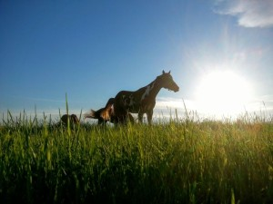 Horses grazing in the sun