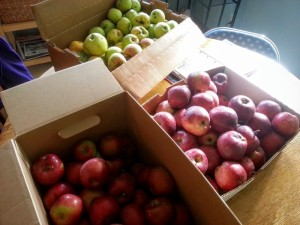 boxes filled with 3 kinds of apples