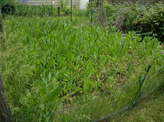 Garden overgrown with weeds