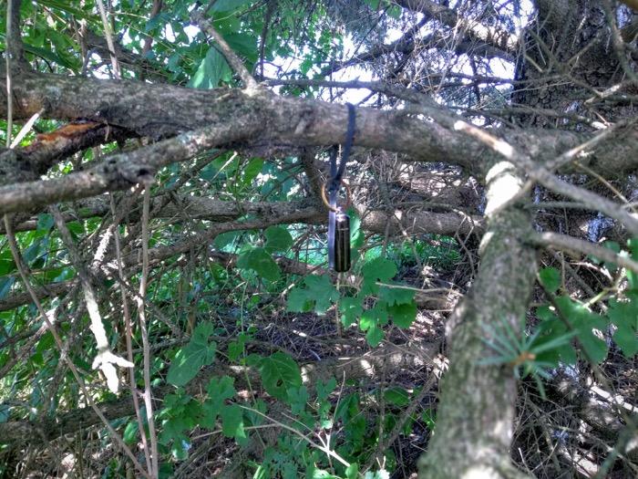 Geocache hidden in a tree