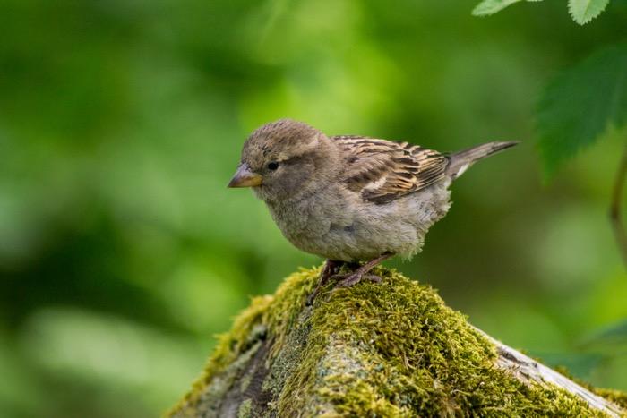 Little bird on a mossy rock