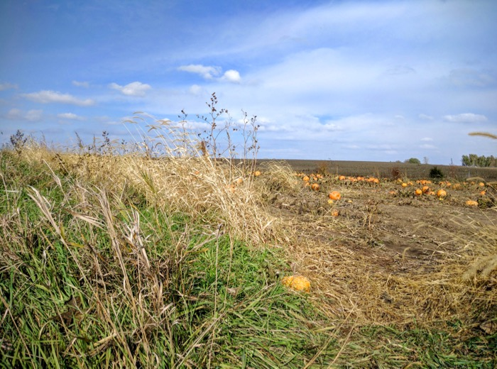 blue-skies-white-clouds-and-orange-pumpkins