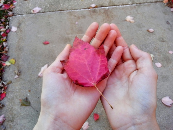 red-fallen-leaf-in-palm-of-hands