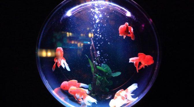 Memory Monday – Leaky Fish Tank