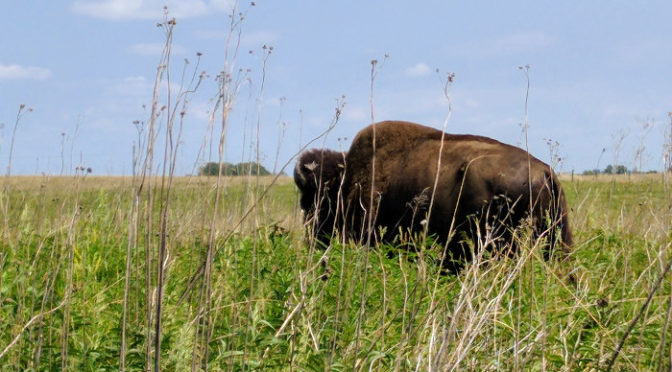 Wordless Wednesday – Buffalo