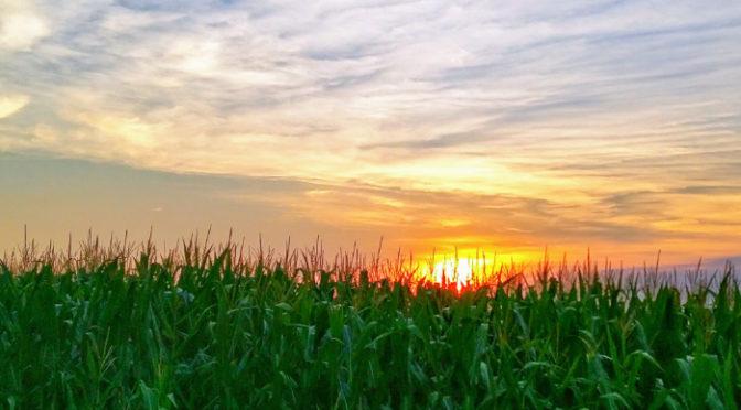 Wordless Wednesday – Iowa Cornfield Sunset