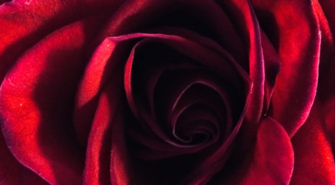 Wordless Wednesday – Roses